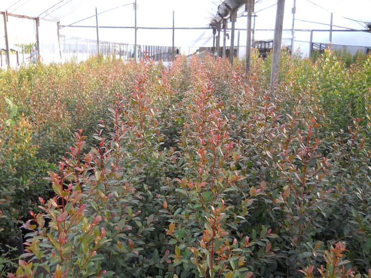 plantas y arbustos de exterior ideas de disenos